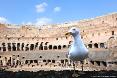 A seagull sits on a ledge inside the Colosseum in Rome, Italy on Friday, Feb. 17, 2017.