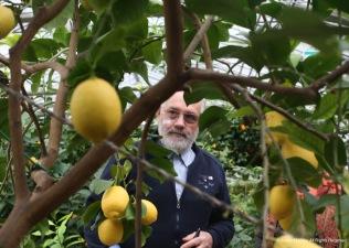 A lemon farmer in Italy gives a tour of his lemon farm.